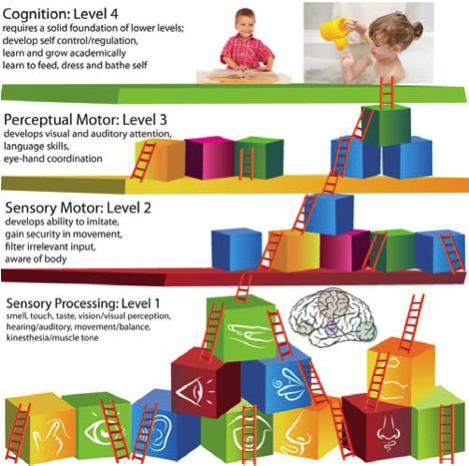 sensory diagram1
