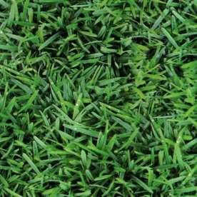 grass pvc